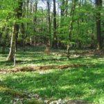Frühjahrswald