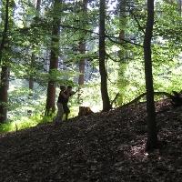 Gestalten im Wald: Vertrauen