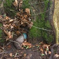 Blaues Ei im Wald