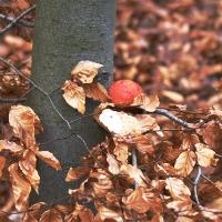 Rotes Ei im Wald