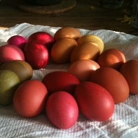 Ostereier mit Naturfarben gefärbt