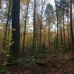 Pflanzenbestimmung: Essbare Pflanzen im Herbst 14/15-09-2019