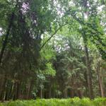 Pflanzenbestimmung: Essbare Pflanzen im Sommer 22/23-06-2019
