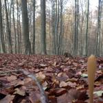 Pflanzenbestimmung: Essbare Pflanzen und Bäume im Winter 23/24-11-2019
